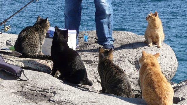 猫島 毒殺 幸せの猫