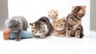 猫カフェ 死亡事件 MOCHA 料金